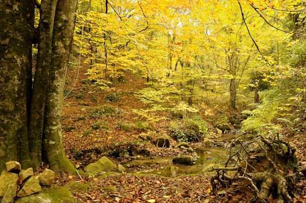 Parc Naturel de Montseny