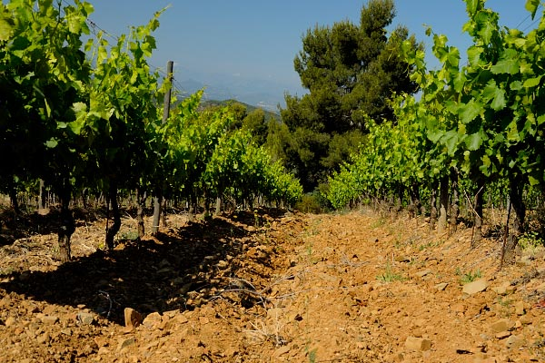 Vignobles lors d'un randonnée de trois jours au Priorat